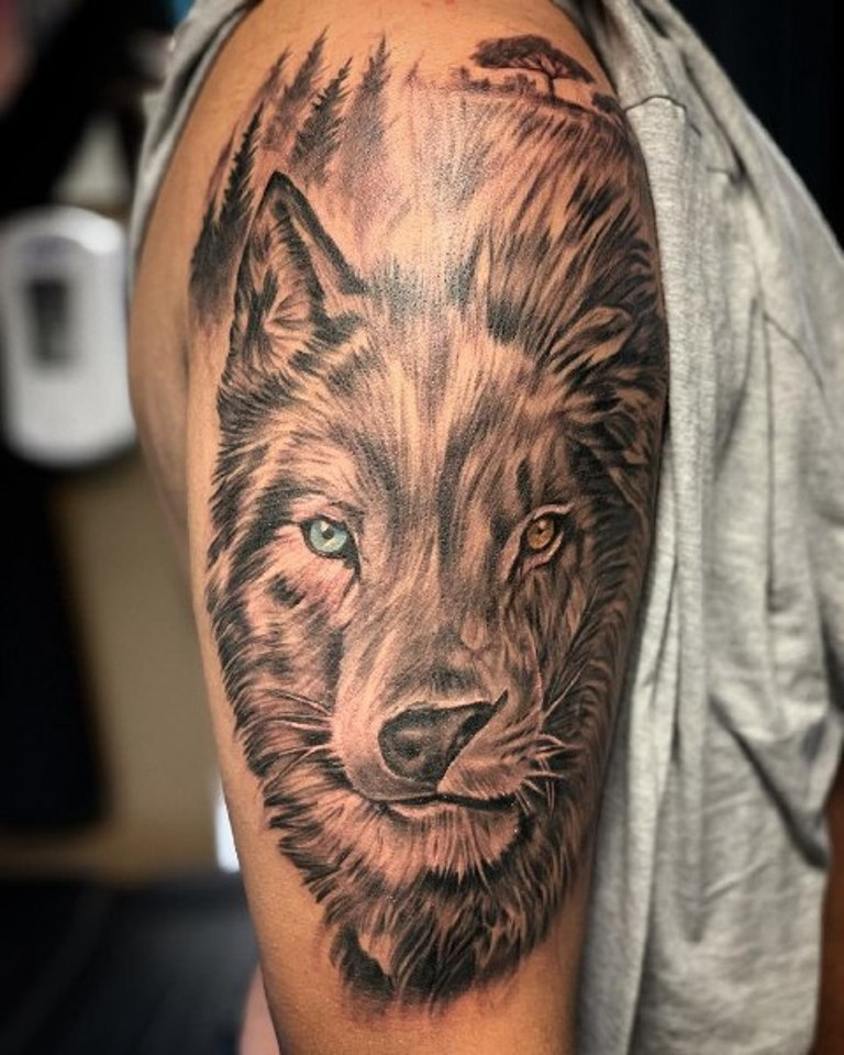 Волк и лев