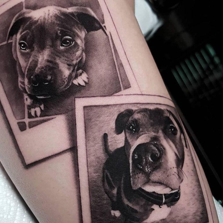 собаки тату